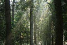 G&E forest light