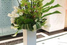 Красота тюльпанов