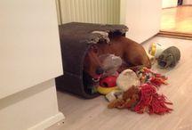 My dachshund / Sweetie pie