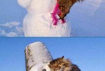 Cute - Animals