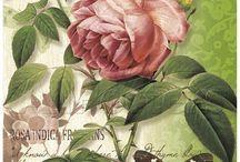 цветЫ  веточки бабочки птички / .фото и рисунки