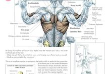FITNESS - WORKOUT ANATOMY