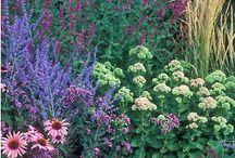 domek - zahrada