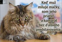 fakty verzus mýty o mačkách /