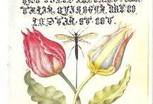 волшебная ботаника