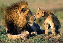Fascinating Wildlife