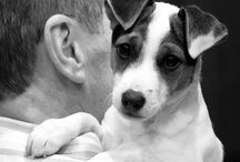 life is better with a jack russell.