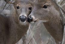 cute deers