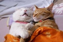 Zonked :-) / funny and cute sleeping animals / by Beth Joest