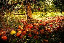 Ősz - Autumn