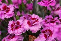 Water Wise Plants with Wow Factor / Bold new perennial varieties that are water wise