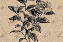 Flowers Antique images