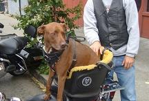 DOG TRAVEL...