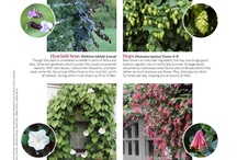 Vines to plant for outdoor newborns