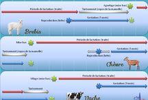 Agronomie et infographie pédagogique