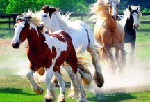 beautiful horses / cute cute :D