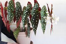 House Plant Wishlist