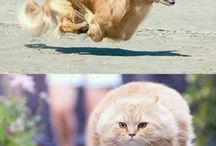 Ha ha funny!!!