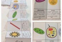 Teaching Ideas: Biology