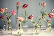 Flowers / Flowers & botanics