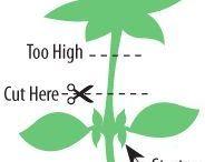 Cuidado de plantitas