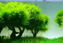 Aquascape's