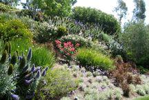 plantation jardin