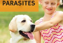 Pet Health Info You Can Trust