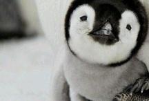 Pinguiniiiii