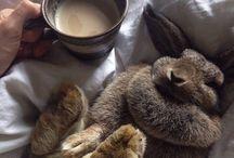 Te Bunny