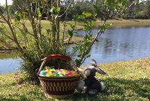 Bolga Baskets for Various Uses / Here are some photos of uses for Bolga Baskets.