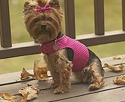 Dog harness and patterns