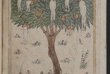 wak wak ağacı