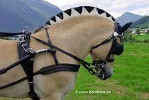 Horse's and pony's