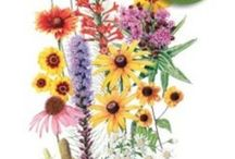Botanical Interests - Wildflower Seeds