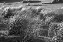 Black and White / Zwart/Wit foto's