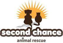 Animal Org Logos