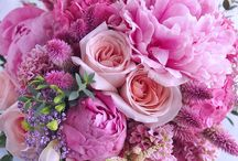 pink pink flowers