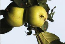 Omenapuu Jukka Mikkonen / Mielenkiintoinen ongelma odottaa ratkaisua