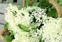 ❁ Elderflower ❁