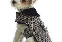 Abrigo canino