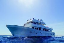 Sea Star / The most wanted yacht in Paphos harbour. Luxurious yacht, cushioned seating all the way around and plenty of space for 150 people.