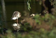Ptaki i inne poboczne zjawiska / Ptaki i ich życie i nasze obok nich