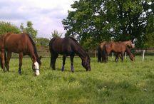 NatuurlijkPaarden.nl / Natuurlijk Paarden is een blog en online community over alles dat met natuurlijk paarden houden te maken heeft. Vanuit mijn passie voor gelukkige en gezonde paarden deel ik mijn info en ervaringen graag met jou! Geen oordeel, alleen leuke, interessante en inspirerende artikelen.