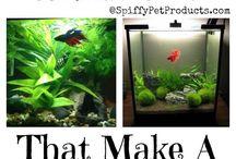 Betta fish care