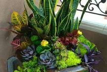 ogród rośliny taras