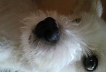 My dog ♥ / My dog name is 뽀삐.