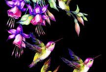 kolibříci 2