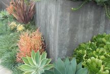 Drought Friendly Landscapes