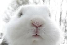 rabbit  / by Zen Kanie